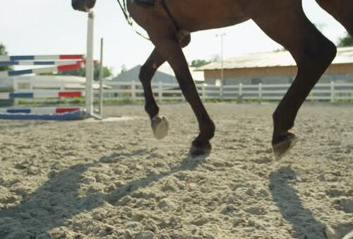 Equestrian Riding